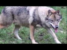 Parc animalier de Courzieu en vidéo