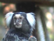 Réserve zoologique de Calviac en vidéo
