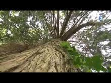 Arboretum National des Barres en vidéo