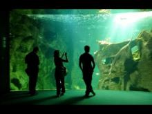 Aquarium de la rochelle en Vidéo