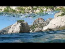 Naturoscope - Musée de la Mer en vidéo