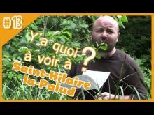 Les Oiseaux du Marais Poitevin en vidéo
