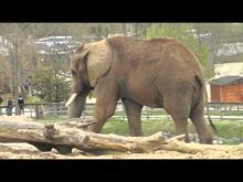 ZooParc de Beauval en vidéo