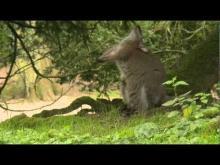 Parc Zoologique de Clères en Vidéo